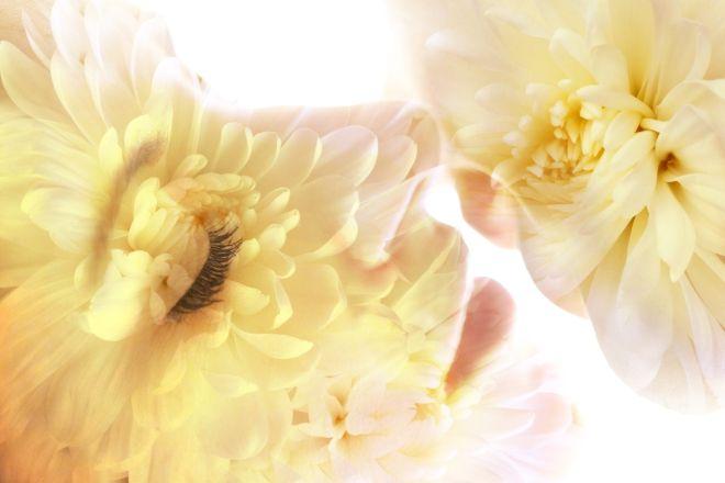 woman flower 23df