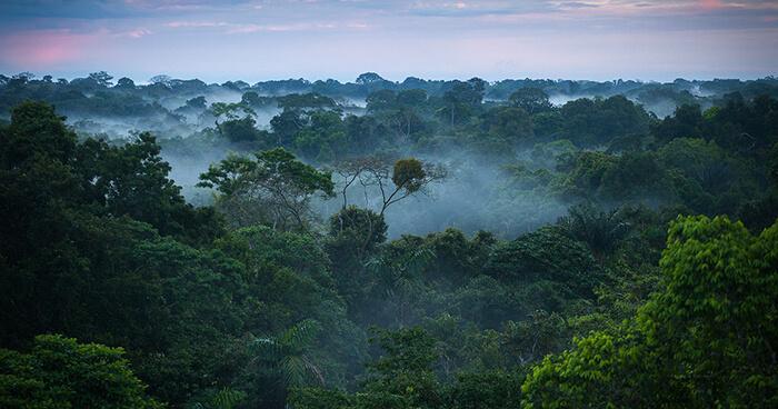 Испарение воды деревьями амазонских джунглей заставляет воздух над ними подниматься вверх, «засасывая» в Амазонию влажные воздушные массы с Атлантики / ©upliftconnect.com